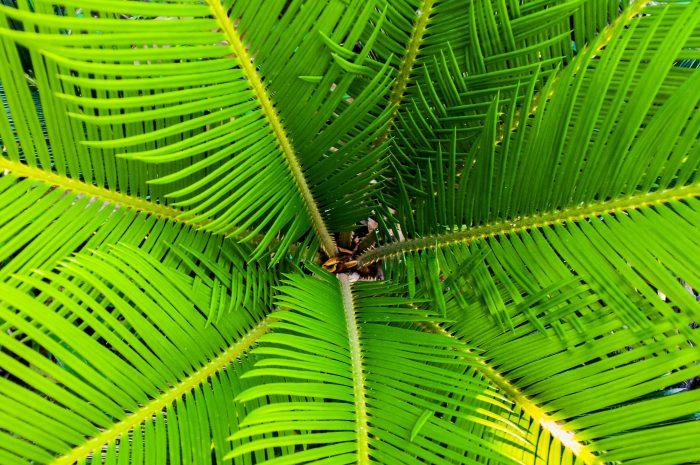 bahamas-sharemysea-7